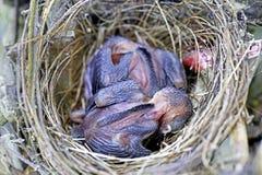 Vogel in verschillende kleuren Royalty-vrije Stock Foto's