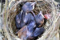 Vogel in verschillende kleuren Royalty-vrije Stock Foto