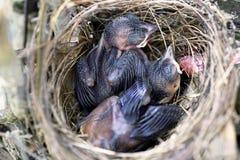 Vogel in verschillende kleuren Stock Foto