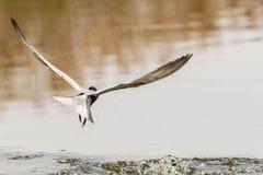 Vogel visserij stock afbeelding