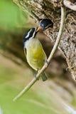 Vogel voedend kuiken, Zuid-Afrika royalty-vrije stock foto