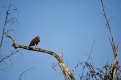 Vogel von beten Stockbild