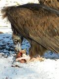 Vogel von beten Stockfotos