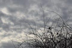 Vogel-vormen Royalty-vrije Stock Fotografie