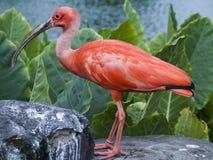 Vogel Wasser Stockbild