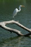 Vogel Wasser Lizenzfreies Stockbild
