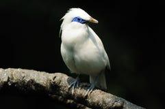 Vogel, wat kijkt u? Royalty-vrije Stock Foto