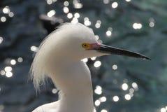Vogel. Witte vogel aan oever bij Everglades Royalty Free Stock Image