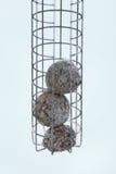 Vogel-Zufuhr lizenzfreies stockbild
