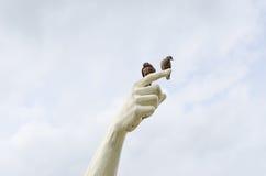 Vogel zur Hand Lizenzfreie Stockbilder