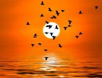 Vogel zur Sonne Lizenzfreie Stockfotos