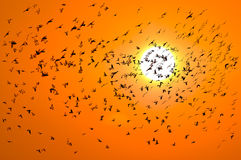 Vogel zur Sonne Lizenzfreies Stockbild