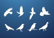 Vogelansammlung Lizenzfreie Stockfotografie