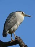 Vogelauge stockfotos