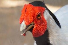 Vogelaugen Stockbilder