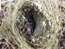 Vogelbaby lizenzfreies stockbild