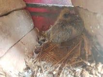 Vogelbaby Stockbild