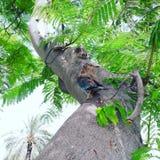 Vogelbaby Stockbilder