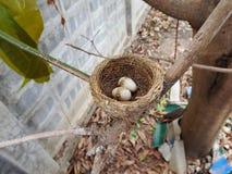Vogelbaby und Nest Stockfoto