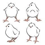 Vogelbaby von vier Winkeln Lizenzfreie Stockbilder
