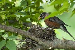 Vogelbabys stockfoto