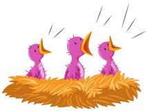 Vogelbabys, die im Nest schreien Stockbild