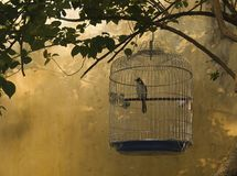 Vogelbauer. A bird in birdcage in the village HoiAn,Vietnam Royalty Free Stock Photo