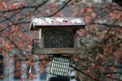 Vogelbeobachtung lizenzfreies stockbild