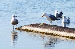 Vogelbeobachtung Stockfoto