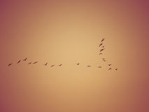 Vogelbildung Stockfoto
