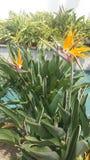 Vogelblume Stockbild