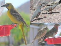 Vogelcollage Drie Beelden Stock Foto