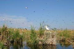 Vogelcolonu Royalty-vrije Stock Foto's