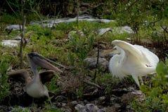 Vogeldistanzhülse stockfoto