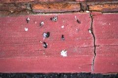 Vogeldung auf Zementwandhintergrund Stockbilder
