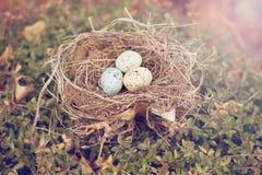 Vogeleier in einem Nest Lizenzfreies Stockfoto
