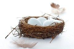 Vogeleier in einem Nest mit Federn Stockbild