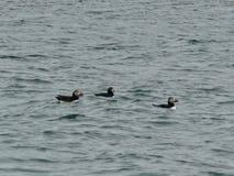 Vogeleiland, Kaap Breton royalty-vrije stock fotografie