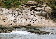 Vogeleiland, Kaap Breton stock foto
