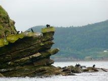 Vogeleiland, Kaap Breton stock afbeelding