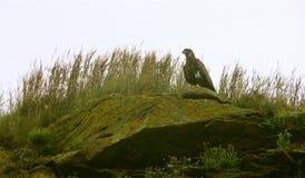 Vogeleiland, Kaap Breton royalty-vrije stock afbeeldingen