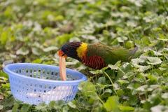 Vogelessen stockbild
