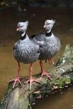 Vogelexemplar Parque DAS an den aves Lizenzfreie Stockbilder