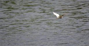 Vogelfülle Lizenzfreie Stockfotos