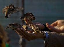 Vogelfütterung Lizenzfreie Stockfotografie