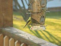 Vogelfütterung Stockfoto
