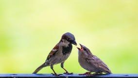 Vogelfütterung Stockfotografie