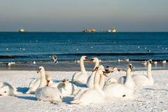Vogelfamilie. Lizenzfreie Stockfotos
