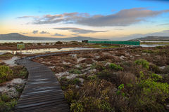 Vogelfell am Westküsten-Nationalpark - Südafrika Stockfotos