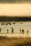 Vogelfeuchtgebiets-Schutz lizenzfreies stockbild